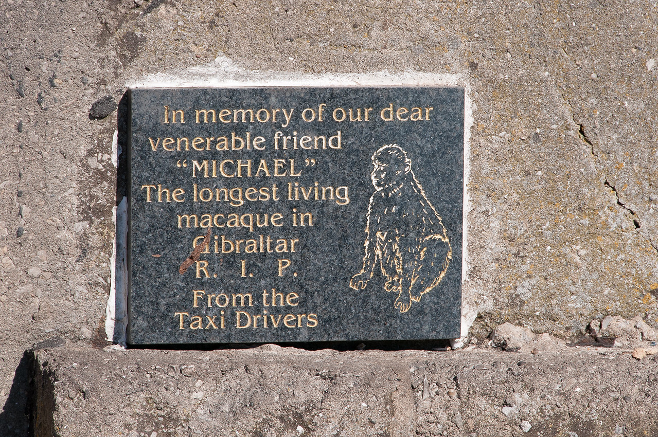 Memorial for a dead ape spotted in Gibraltar