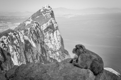 The cliff and the ape in B&W - Gibraltar