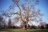 A tree in Kew Gardens