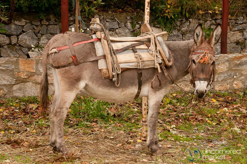 Donkey Transport on Crete