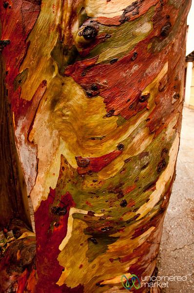 Colorful Tree Bark - Spinalonga, Crete