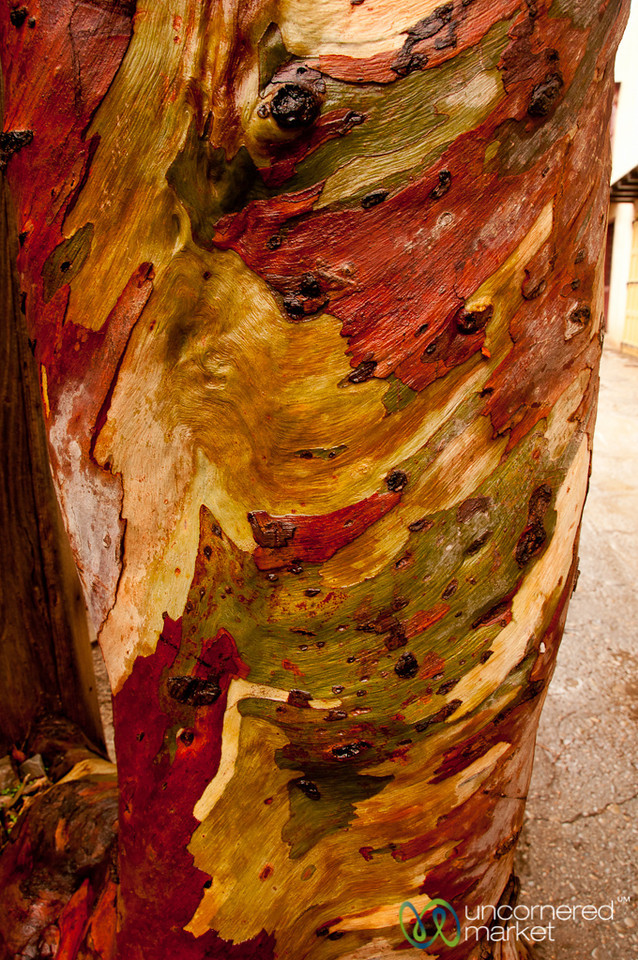 Colorful Tree Bark - Spinalonga, Crete