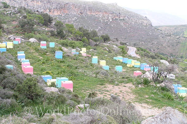 Crete - Lasithi Plateau - Bee Hives