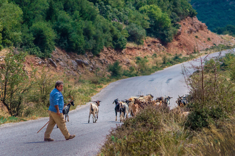 windy road with goatherd