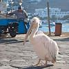 Mykonos Mascot - Petros the Pelican