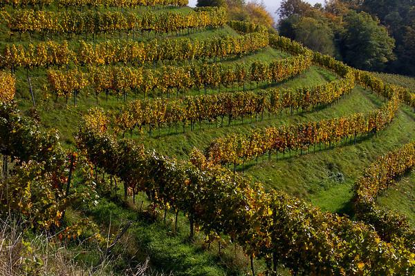 Hohentviel Vineyard, Singen, Germany