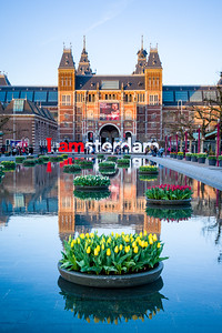 Tulips signal the arrival of spring in the reflecting pool in front of the Rijksmuseum in Amsterdam.