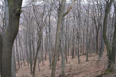 Forest near Dobogókó