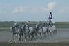 Kalocsa - Horse Show 8