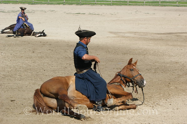 Kalocsa - Horse Show 5