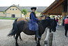 Kalocsa - Horse Show 1
