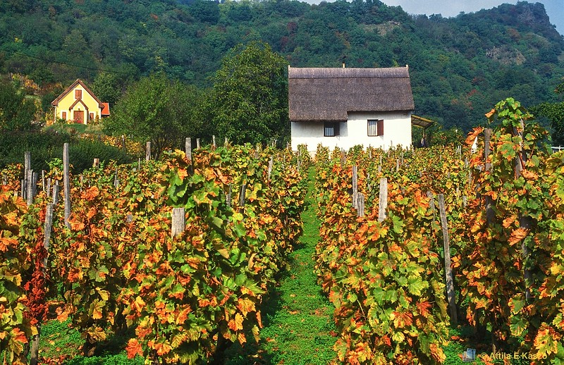 Vineyard / Cottage<br /> Hegymagas, Hungary