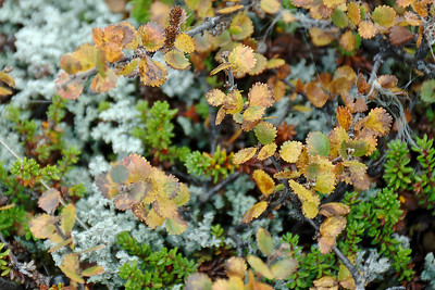 West Fjords - Subarctic flora
