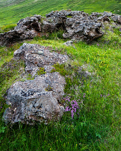 Flowers and rocks near Husavik