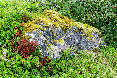 Moss covered rock near Barnafoss