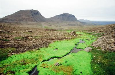 Highlands above Flokalundur, area known as Kliefaheidi