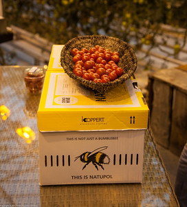 Tomatoes and live bees that pollinate them, Fridheimar Farm, Iceland