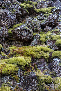 MOSS COVERED LAVA ROCKS