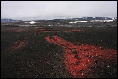Lava field near Askja caldera