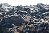 Blue Lagoon - Lava Field