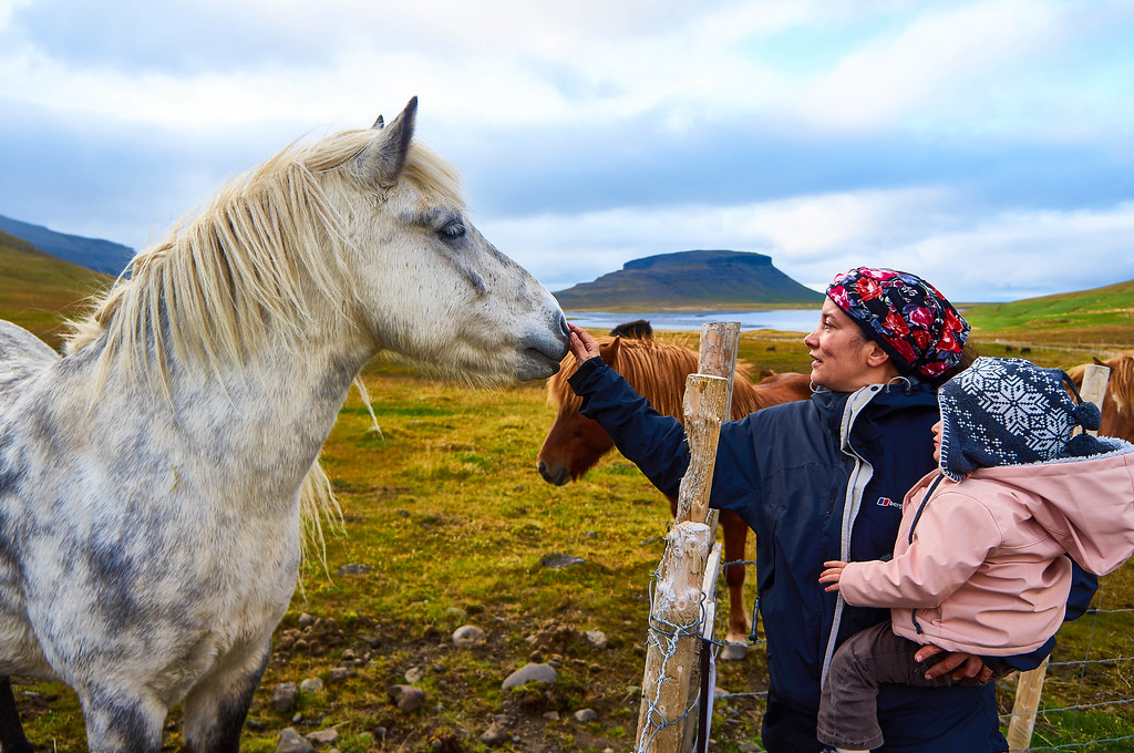 Meeting with horses at Kirkjufellsfoss, Iceland