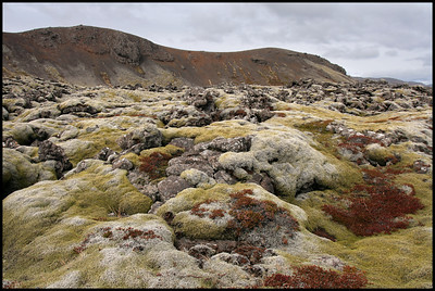 Moss covered lava fields, Reykjanes peninsular