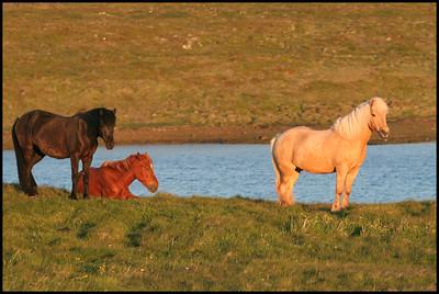 Horses near Helgafell