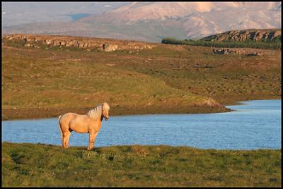 Horse near Helgafell