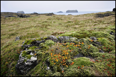 Lava vegetation