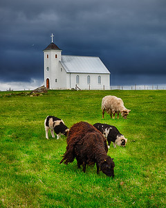 Sheep and churches are everywhere in Iceland.