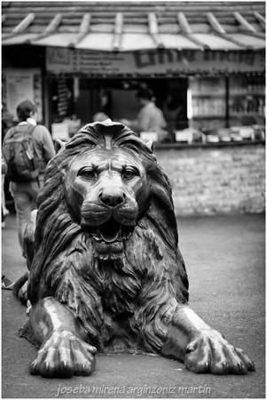 el león de camden