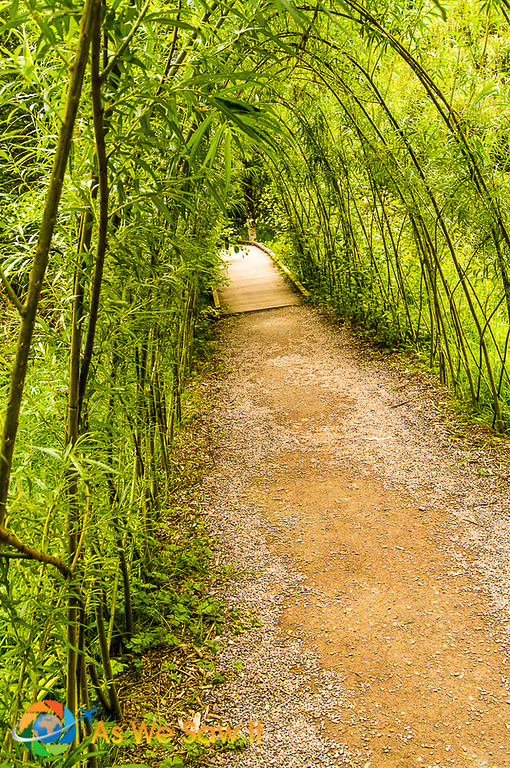 Blarney Castle garden path
