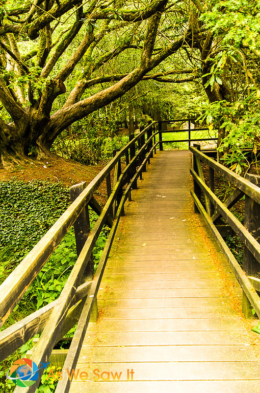 Boardwalk surrounded by gnarled trees
