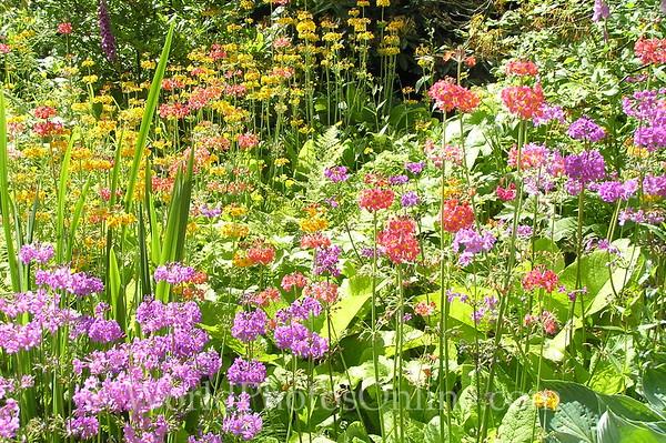 Dublin - Powerscourt Estate - Japanese Garden - Flowers