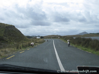 Sheep in Connemara