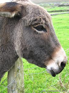 How cute! A Mule! (or a donkey?)