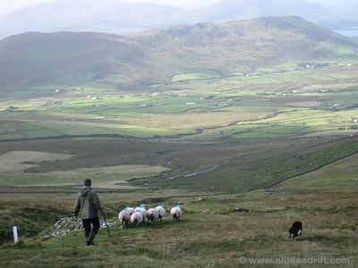 Do the Sheep Deserve that Spectacular View?