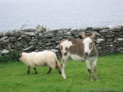 A sheep and a Donkey - the start to a bad joke?