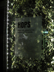 Hops: A Guinness Ingredient