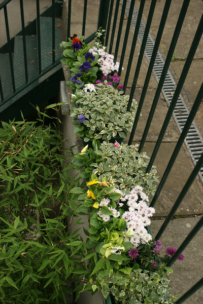Window boxes on the back terrace