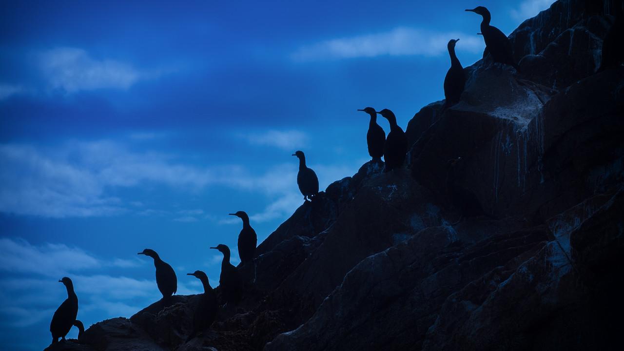 Birds of the Saltee Islands Ireland