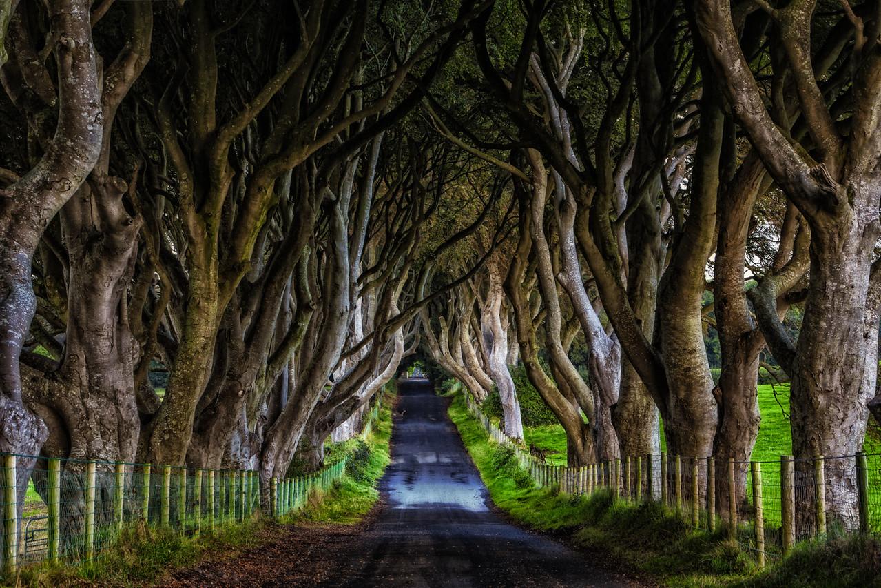 Game of Thrones Set Ireland Dark Hedges