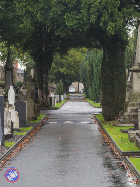Avenue of Yews in Glasnevin Cemetery (©simon@myeclecticimages.com)