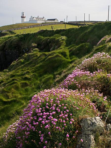 Galley Head Sea Pinks