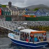 """Boat tours to see Dingle's famous dolphin resident """"Fungie"""""""