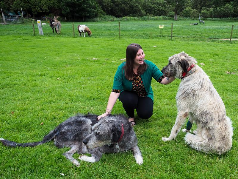 Making Irish Wolfhound friends at Ballyseede Castle