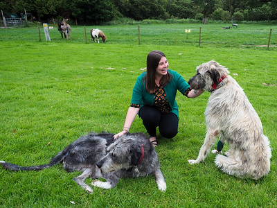Making Irish Wolfhound friends at Ballyseede Castle