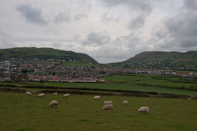 Sheeps on open field at Isle of Man