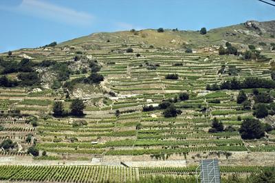 Terraced vineyards in Switzerland