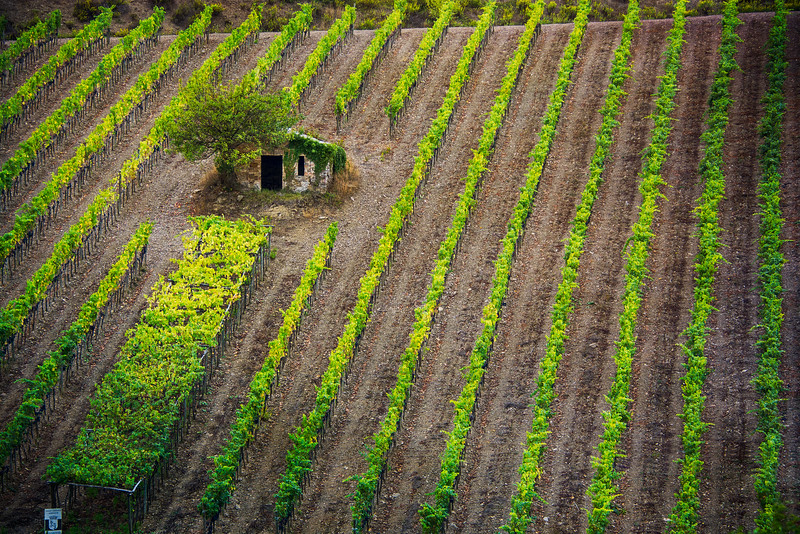 small stone house and vineyard